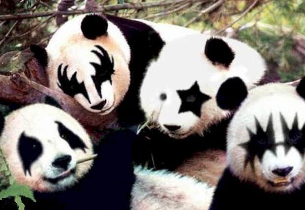 Kiss panda