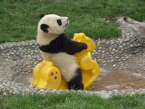 jouet pour panda
