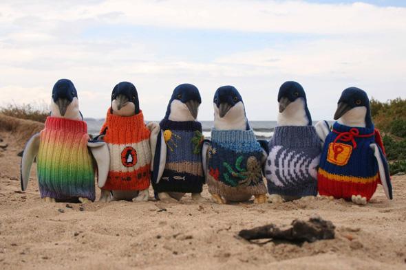 Invitez Pingouin à un défilé de mode !