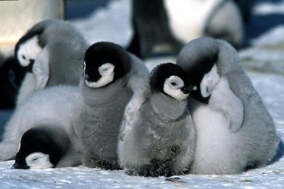 Ouvrez une garderie sur votre site. Pingouin pourra passer si ses petits sont en sureté !